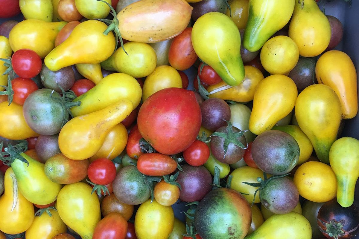 WOP-heirloom-tomatoes