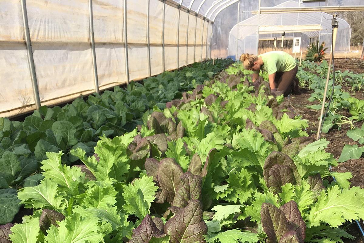 WOP_organic-vegetables