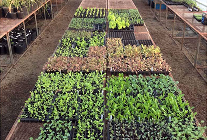 White-Oak-Pastures-Organic-Herbs-feat-1