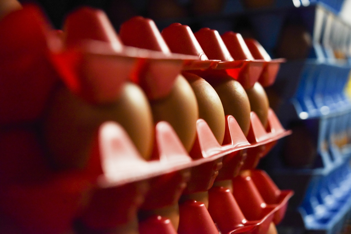 egg crate in egg room pasture raised eggs