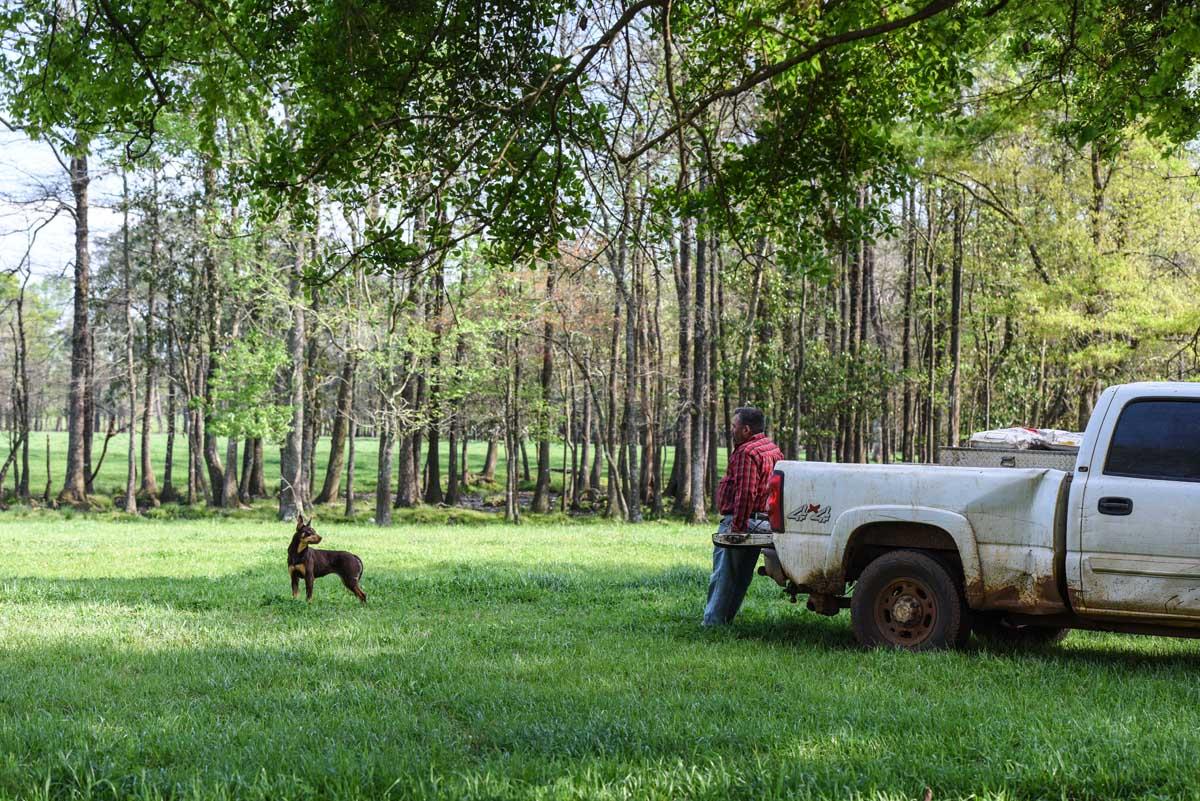 herdingdogs-0381.jpg