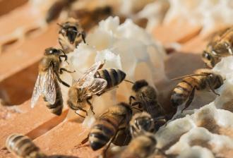 honey-harvest-8-16-2016-26.jpg